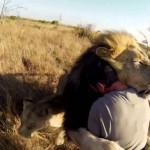 たくさんのライオン!?猛獣と友達になる男!GoPro