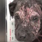 生まれ変わった姿に感動!皮膚炎のせいで殺処分が決まっていた野良犬