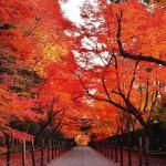 ほんとに東京!?ゆったり紅葉を楽しめるスポット5選*