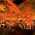 2015年!この秋おすすめ都内の紅葉スポット