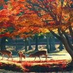 古都奈良の紅葉スポット!厳選
