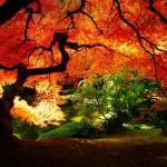 【東京】おすすめの紅葉スポットベスト7