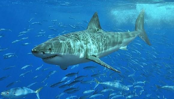 サメのいる海