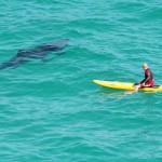 サメが出るビーチ!ベスト5!?