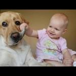赤ちゃんとペット!!可愛すぎる動画