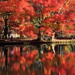 この秋行きたい、紅葉の穴場スポット!軽井沢