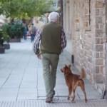 病気で倒れたおじいさんを待ち続ける忠犬!意外な結末に思わず涙する